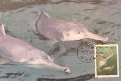 baiji dolphin extinct tourism