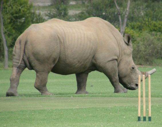 Rhino Cricket South Africa Conservation