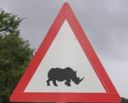 Rhino Speed Traffic