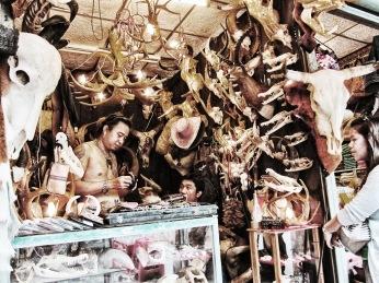 Illegal wildlife trae in Bangkok's Chatuchak market
