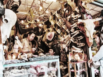 Illegal wildlife trae in Bangkok's Chatuchak market