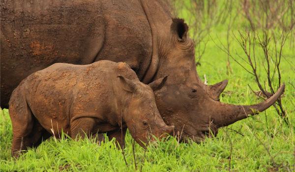 rhino poaching responsible tourism